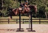 Equestrian Stockholm Champagne Jump_