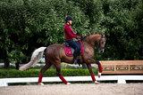 Equestrian Stockholm Bordeaux pad dressuur _