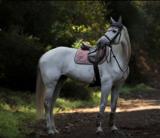 Equestrian Stockholm oornetje dusty pink_